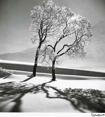 Alfred Eisenstaedt, 'Trees in Snow, near Saint-Moritz, Switzerland', 1947