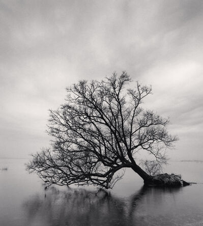 Michael Kenna, 'Falling Tree - Nagahama, Honshu, Japan.', 2002