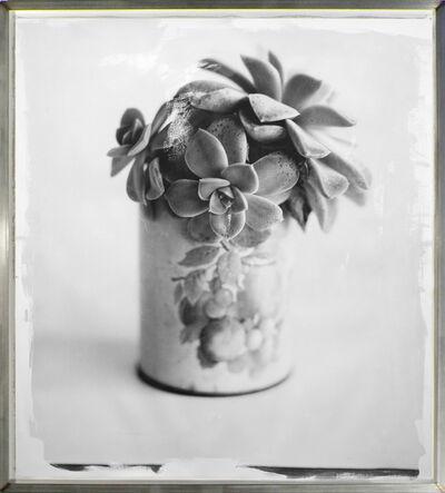 Stephen Inggs, 'Succulent', 2010