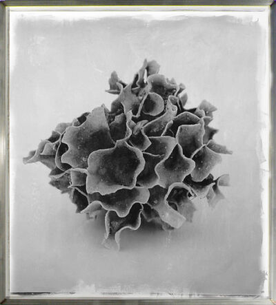 Stephen Inggs, 'Coral', 2007