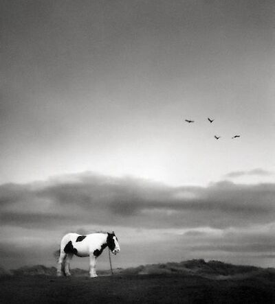 Pentti Sammallahti, 'Druridge Bay, England [lonely horse]', 1998
