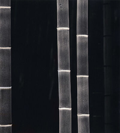Rolfe Horn, 'Giant Bamboo, Kyoto, Japan', 2001-printed 2001