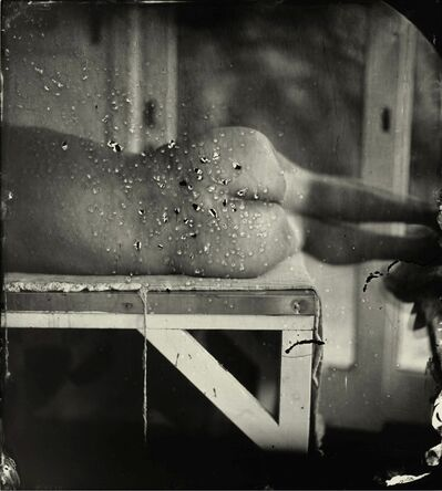 Sally Mann, 'Kingfisher's Wing', 2007