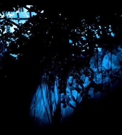 Erik Steffensen, 'Botanical Blue', 2015