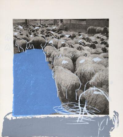Menashe Kadishman, 'SHEEP Portfolio, 8', 1981