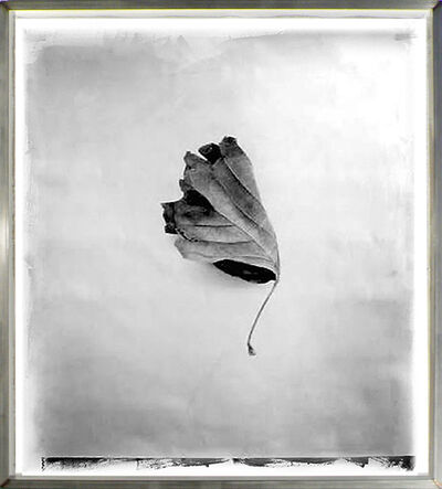 Stephen Inggs, 'Leaf', 2003