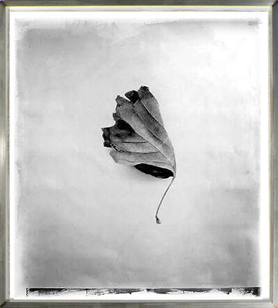 Stephen Inggs, 'Leaf', 2003