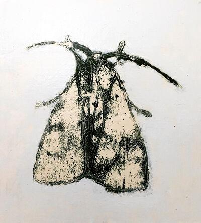 David Konigsberg, 'Moth #9', 2020