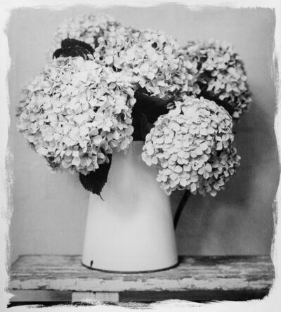 Stephen Inggs, 'Hydrangea in Vase', 2017