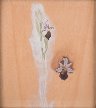Winifred Knights, 'Study of Ophrys Bertolonii, commonly known as Bertoloni's Bee Orchid, circa 1925', ca. 1925