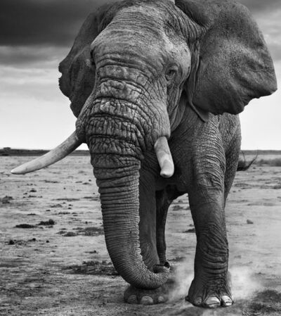 David Yarrow, '50 Shades of Grey'
