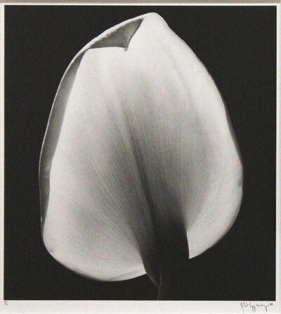 Robert Mapplethorpe, 'Calla Lily', 1984