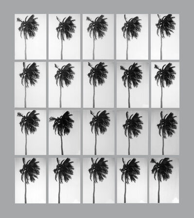 Leandro Katz, '20 Seconds (in the life of a palm tree)', 1975-2012