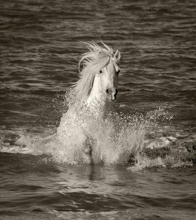 Sarah Corbin, 'Single Horse Splash'