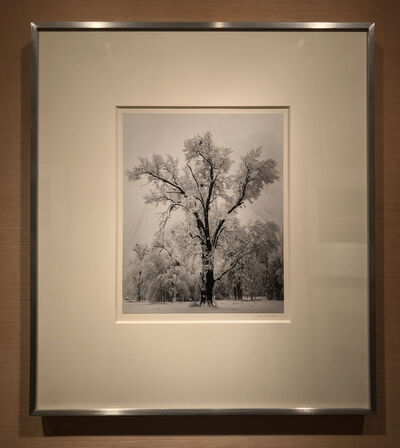 Ansel Adams, 'Oak Tree, Snowstorm', 1948