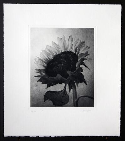 Cy DeCosse, 'Sunflower'