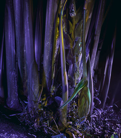Richard Mosse, 'Heliconia rostrata ', 2019