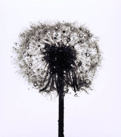 Irving Penn, 'Dandelion', New York; ca. 1973