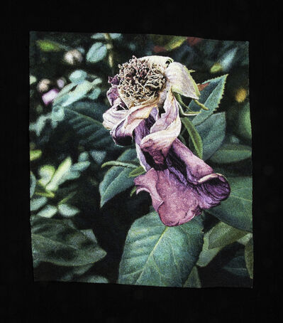 Carol Shinn, 'Fading Rose ', 2020