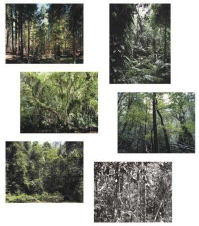 Thomas Struth, 'Paradise - portfolio of six works', 2004