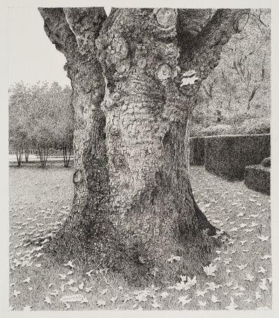 James Blake, 'Old Tree in a Belgian Garden, Kapellen in Antwerp', 2015