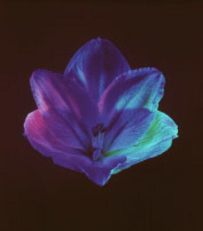 Robert Mapplethorpe, 'Flower, 1985', 1985