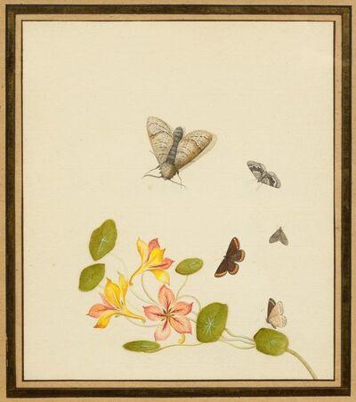 Nicolaas Struyk, 'Golden Columbine with butterflies and moths', ca. 1719