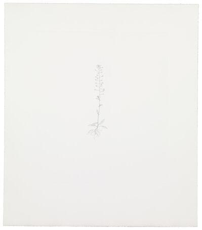 Michael Landy, 'Shepherd's Purse 4', 2002