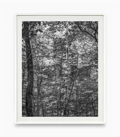 Bryson Rand, 'Untitled/Trees and Light (Skowhegan)', 2019