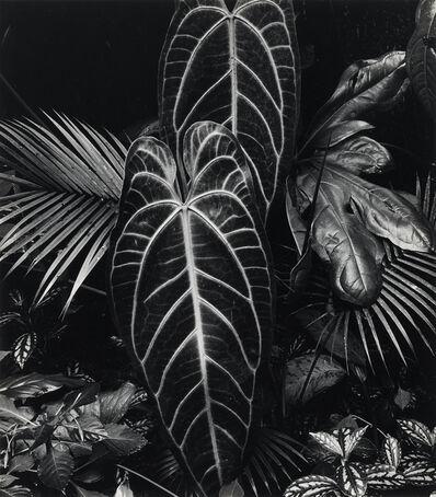Brett Weston, 'Leaf Cluster * Leaf on Asphalt. Together, 2 photographs', 1980