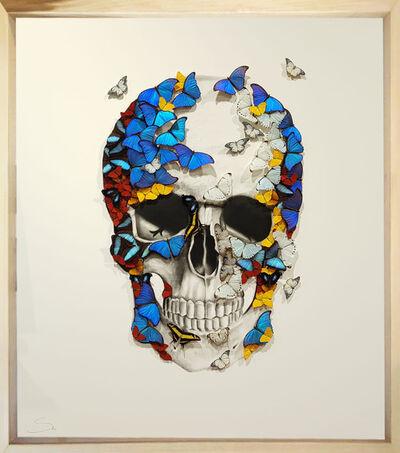 SN, 'Front Skull ', 2019