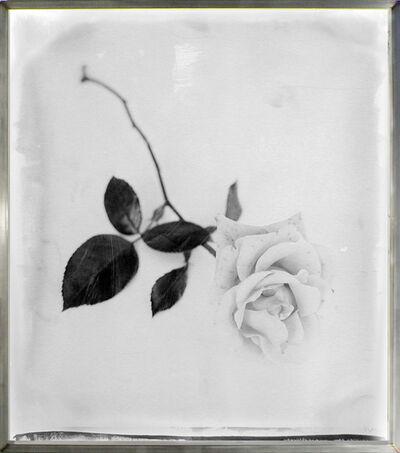 Stephen Inggs, 'Rose Single Stem', 2003