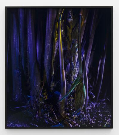 Richard Mosse, 'Heliconia rostrata', 2019