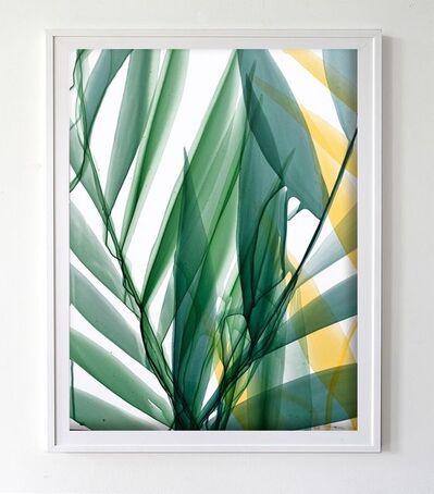 Marina Savashynskaya Dunbar, 'Tropical Study in Sea Green', 2018
