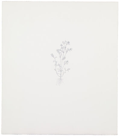 Michael Landy, 'Common Groundsel 2', 2002