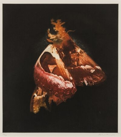 Mat Collishaw, 'Insecticide', 2009