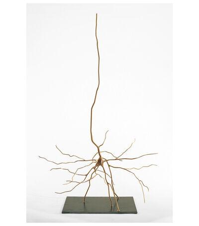 Geoffrey Dubinsky, 'Cajal's Pyramid', 2014