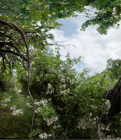 Anne Rowland, 'Rosa Multiflora [Glenmeade, Bluemont, 2009]', 2009