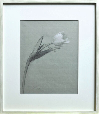 Katie Whipple, 'White Tulip', 2019