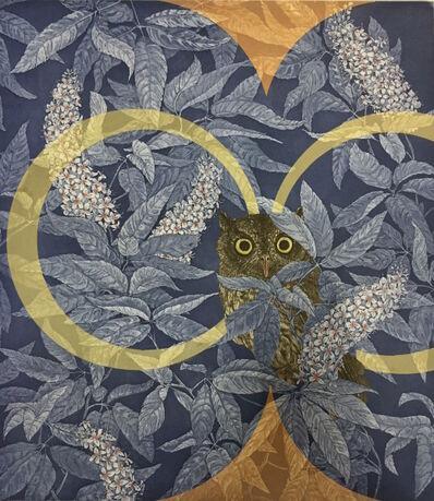 Julia Lucey, 'Western Screech Owl in California Buckeye', 2016