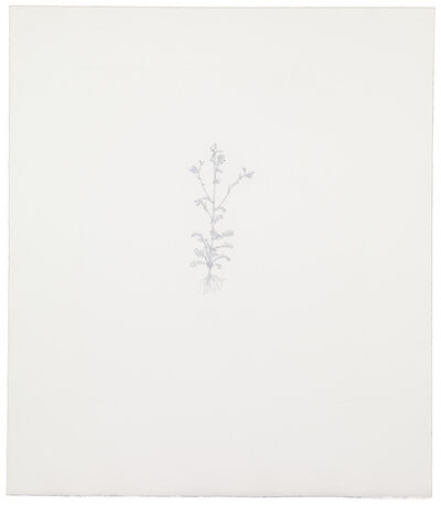 Michael Landy, 'Common Groundsel', 2002