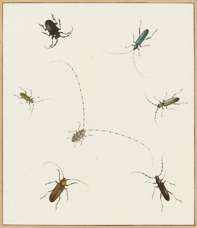 Nicolaas Struyk, 'Insects', ca. 1719