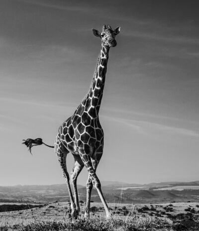 David Yarrow, 'Tiny Dancer', ca. 2019