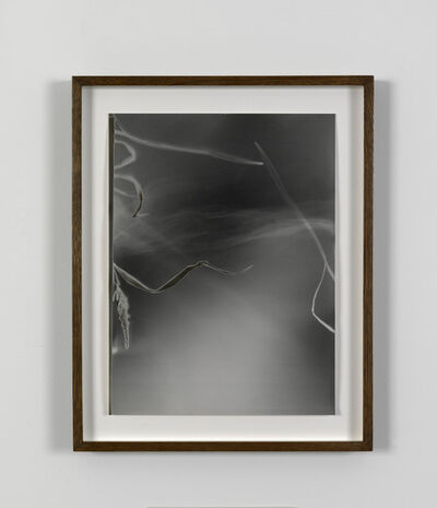 João Penalva, 'Small Weeds from Hiroshima (IV)', 1997
