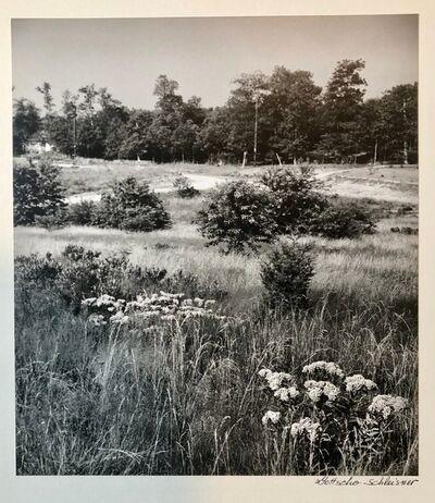 Samuel Gottscho, 'Untitled', Mid-20th Century