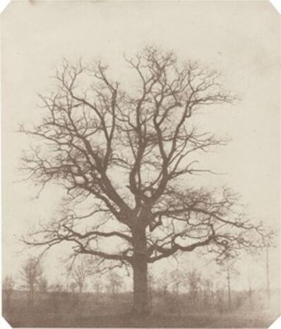 William Henry Fox Talbot, 'Oak Tree', mid 1840s