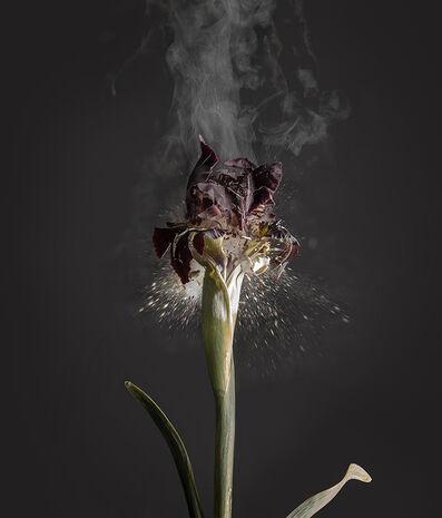 Ori Gersht, 'Iris atropurpurea D01', 2018