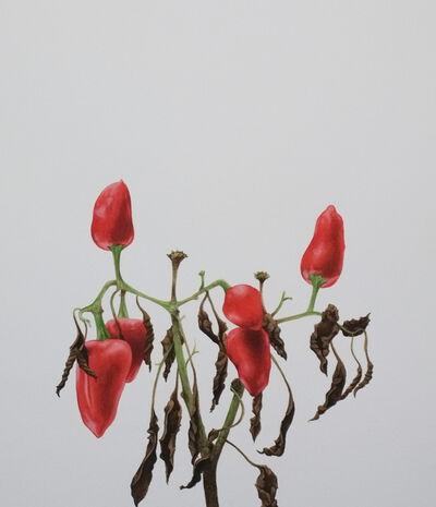 Mauro Piva, 'Seca pimenteira I/ Dry pepper I', 2013