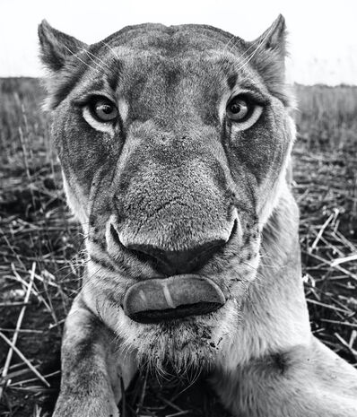 David Yarrow, 'Lunch', 2016