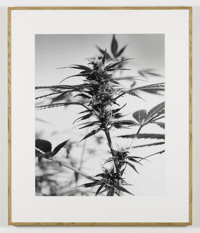 Joachim Koester, 'From the Secret Garden of Sleep 02', 2008